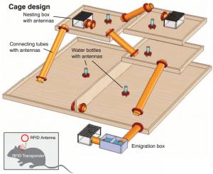 cage-design
