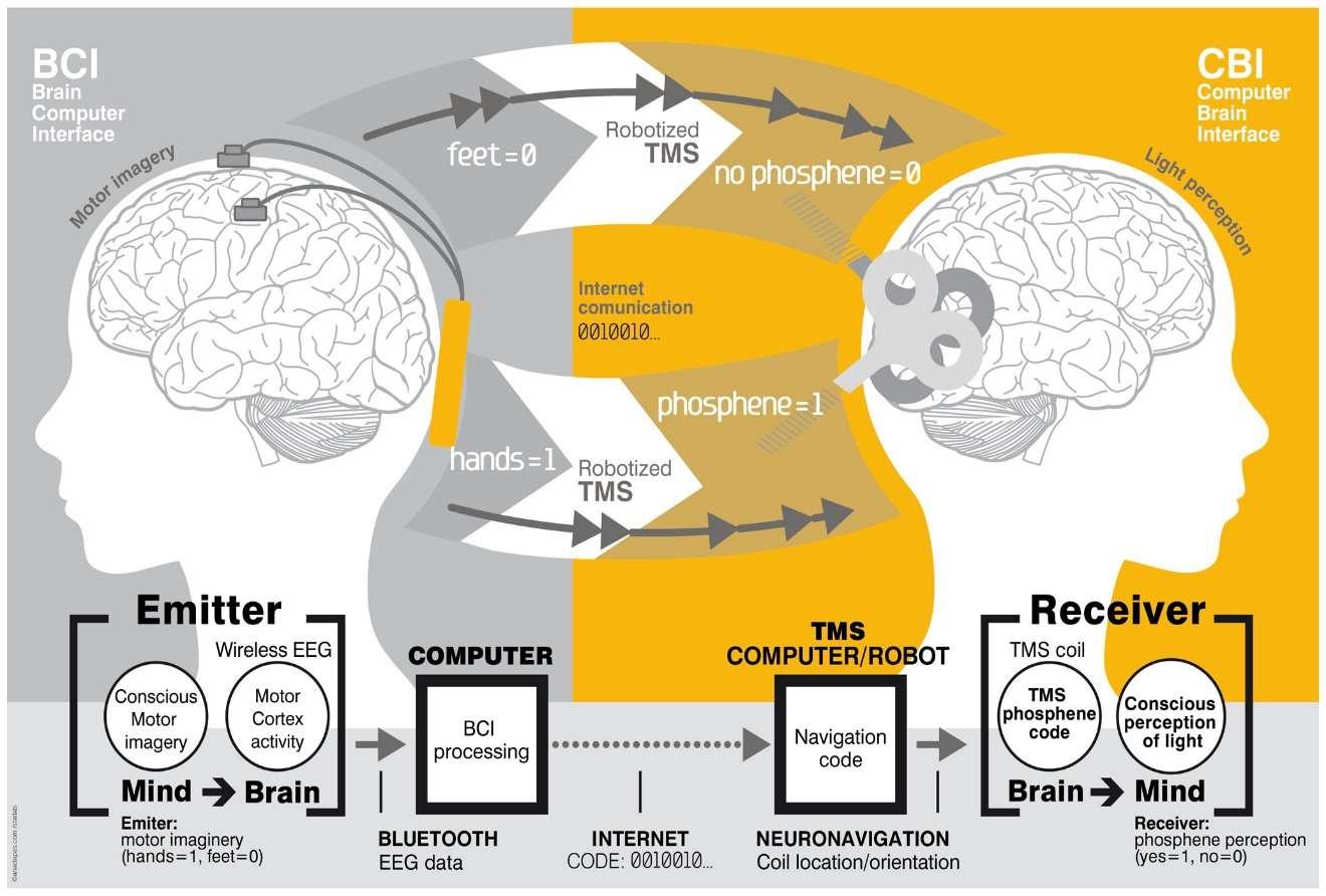 brain_1320_892_60