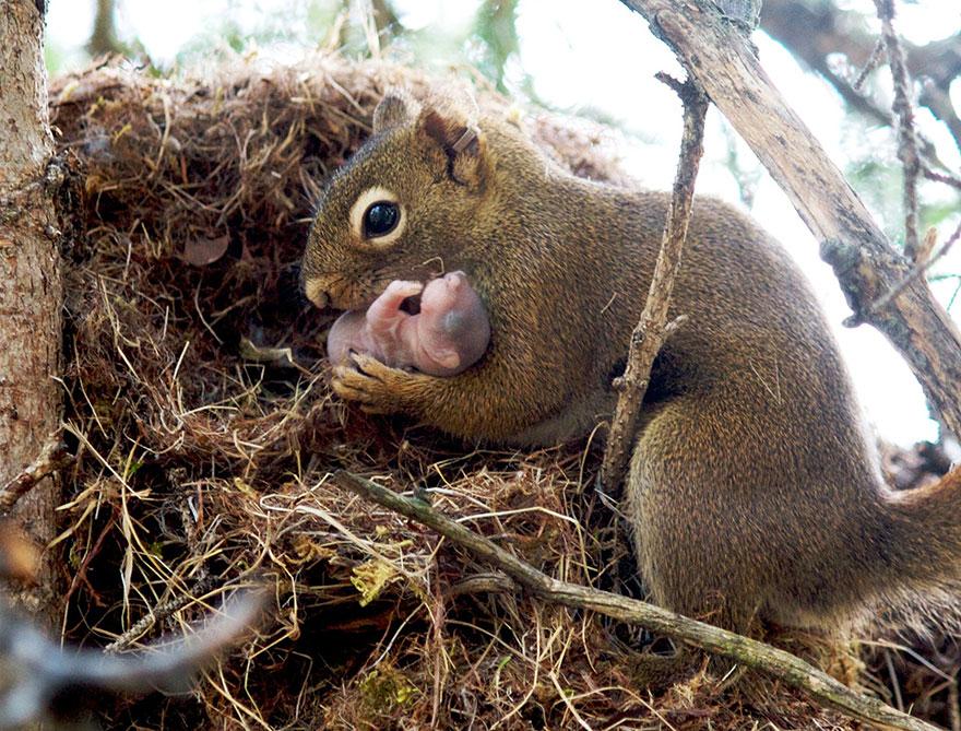 Maternal-instinct-squirrel-Copy