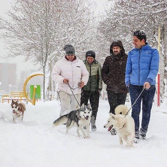 جوانان در روزی برفی همراه سگهایشان در حال گردش. اردبیل، عکس از سید فرید موسوی