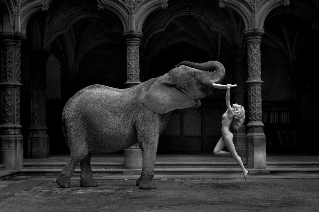 زن و فیل